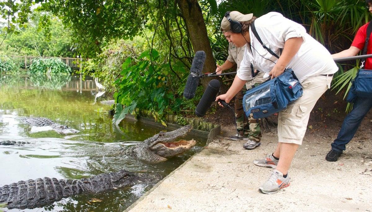 Recording alligator sound effects