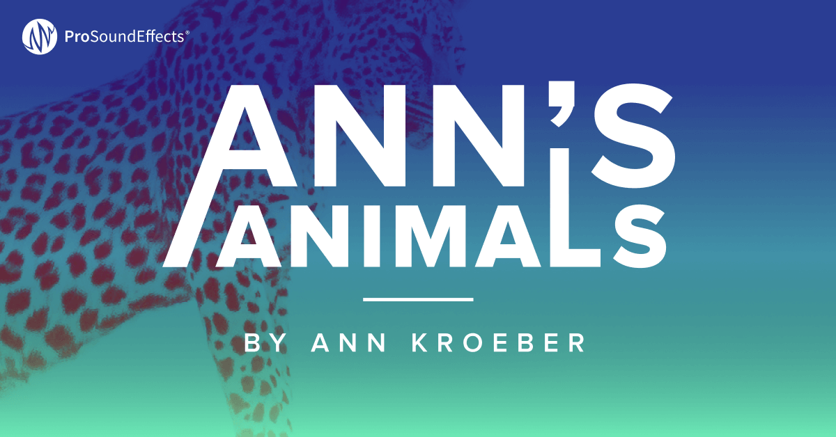 Ann's Animals product image