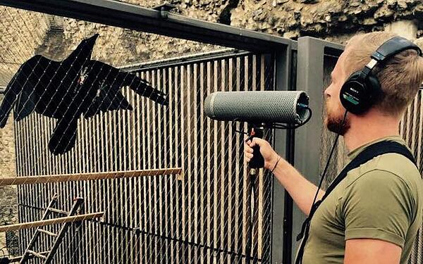 Enos Desjardins recording bird