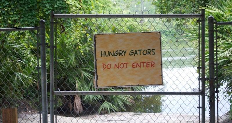 Hungry Gators