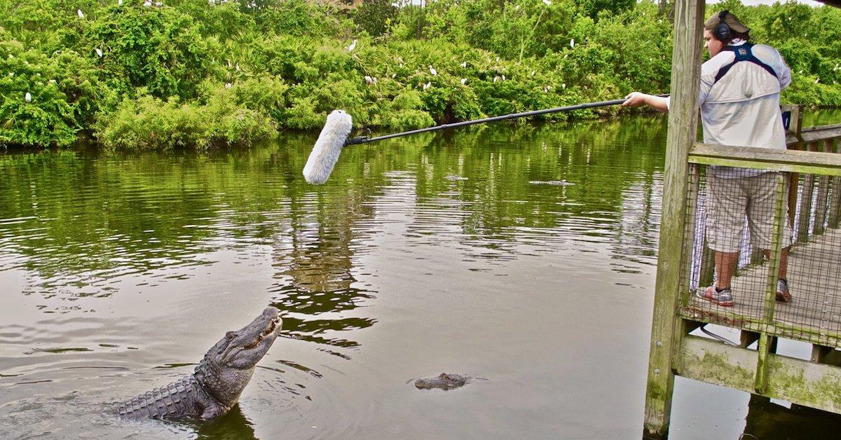 gators-recording-process1